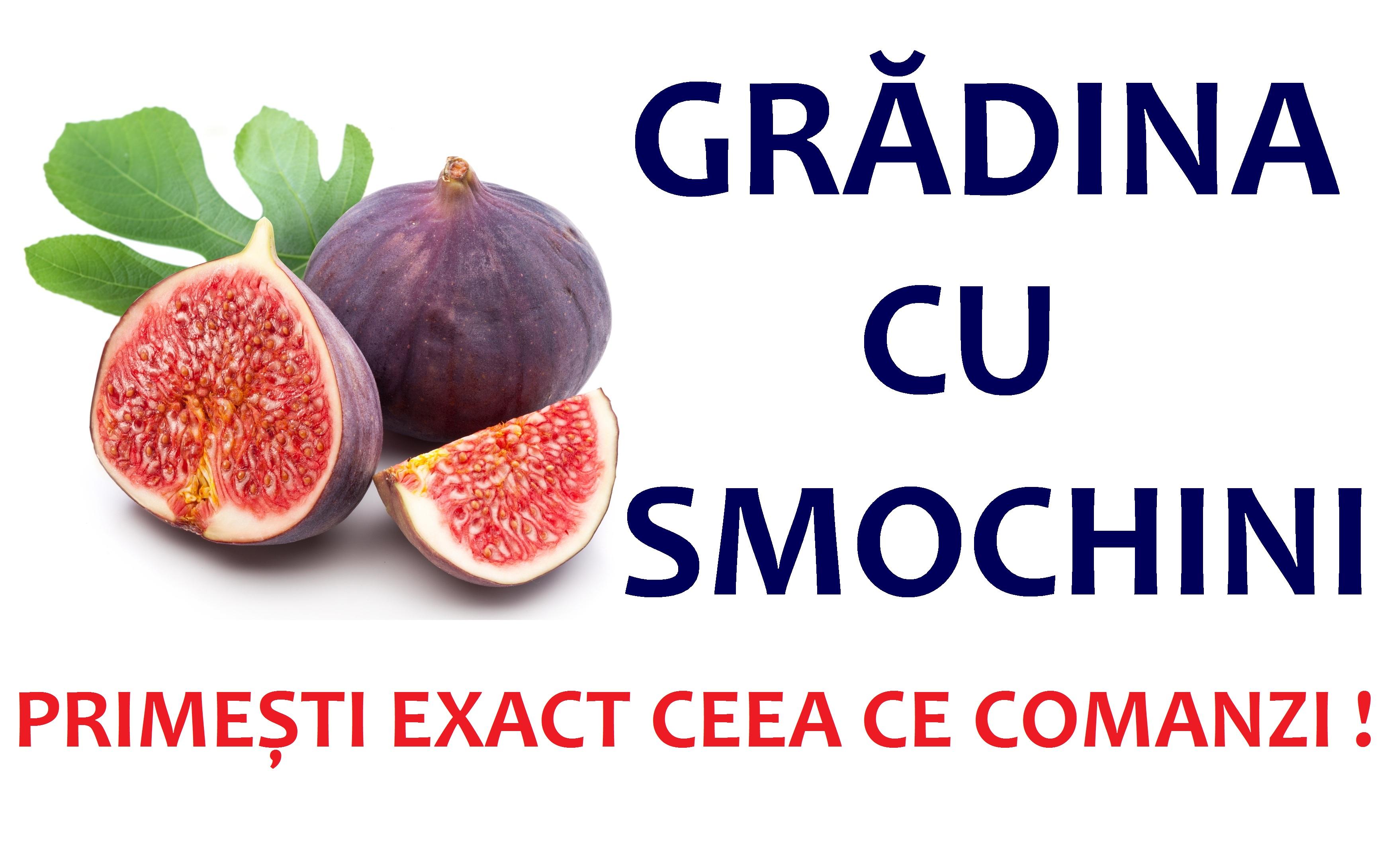Gradina Cu Smochini: Smochini romanesti, Magnolii rare, Tuia, Brazi argintii si plante decorative. Transport gratuit!