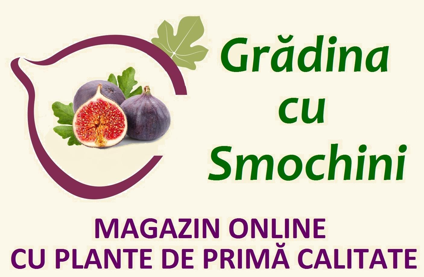Grădina cu Smochini - magazin online cu plante fructifere și decorative